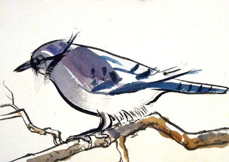 """Bluejay no. 2"" original fine art by Jeff Atnip"