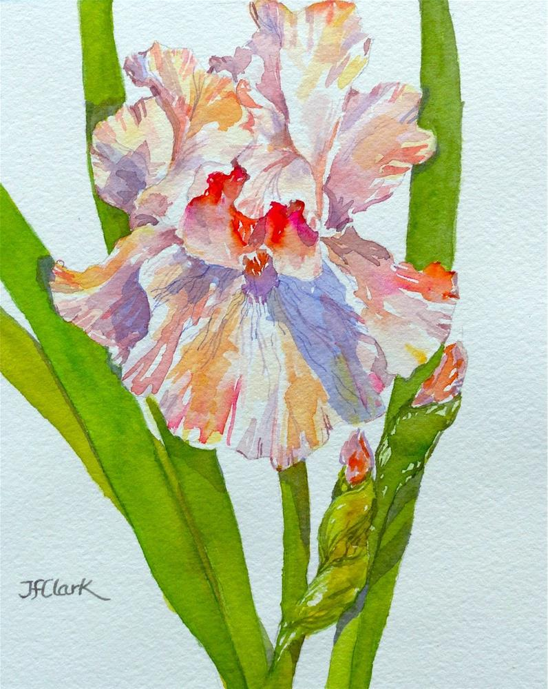 """Fluffy Ruffles"" original fine art by Judith Freeman Clark"