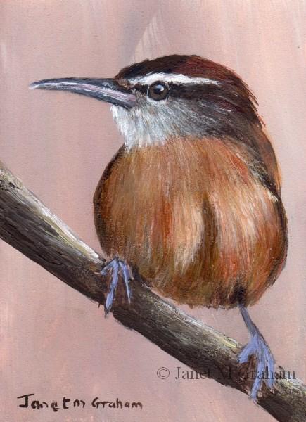 """""""Long Billed Wren ACEO"""" original fine art by Janet Graham"""