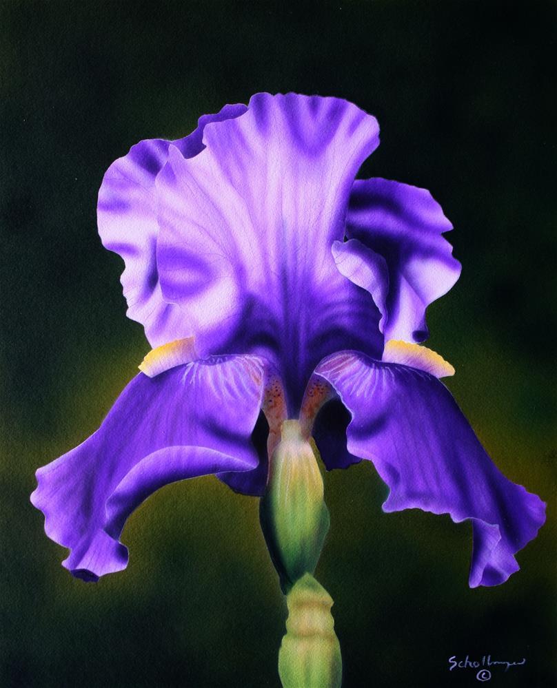 """""""Purple Bloomer"""" original fine art by Fred Schollmeyer"""