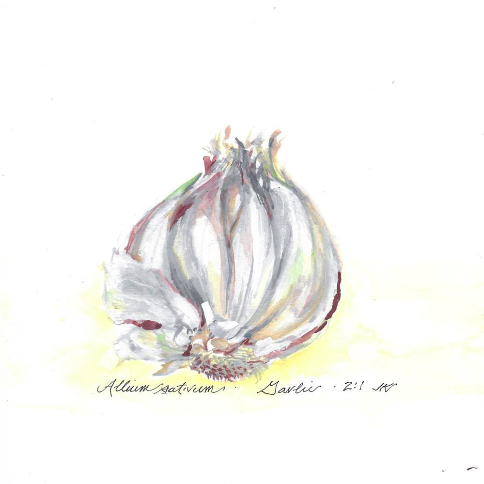 """Allium sativum - Garlic"" original fine art by Jean Krueger"