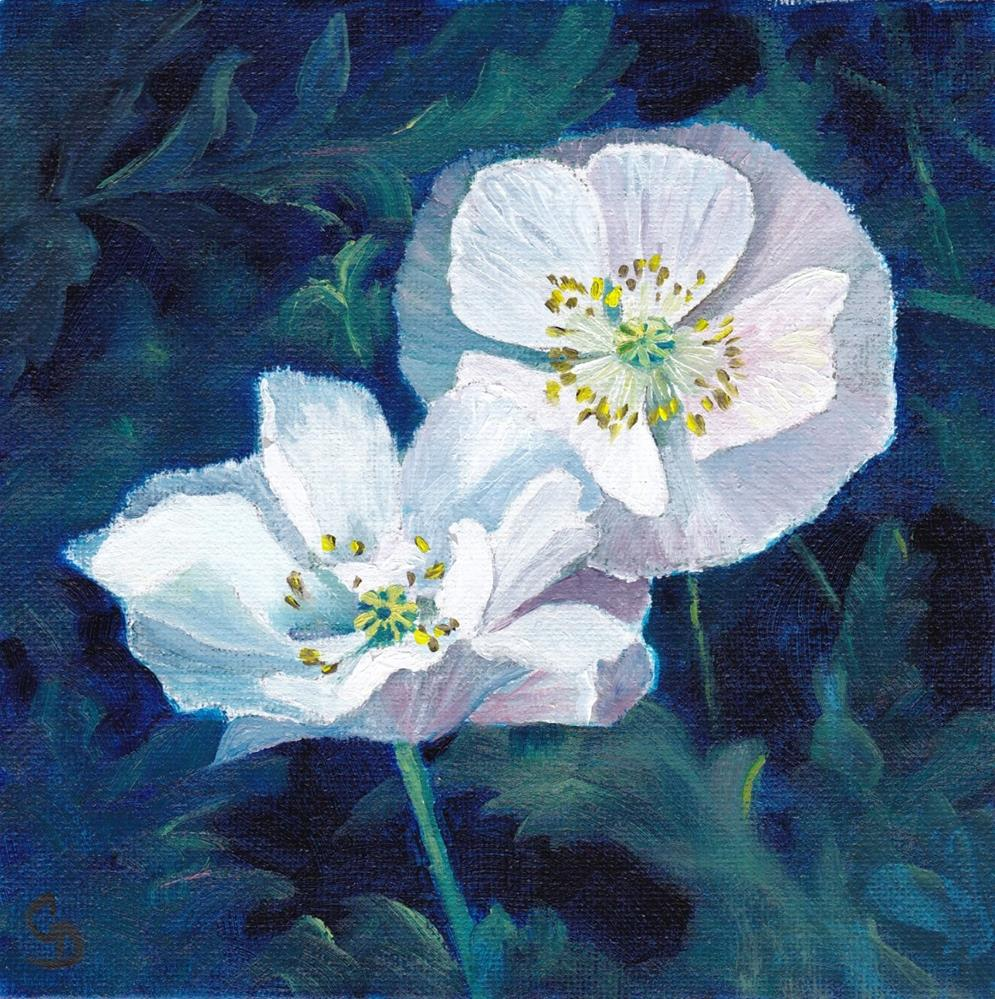 """""""White Poppies"""" original fine art by Christine Derrick"""