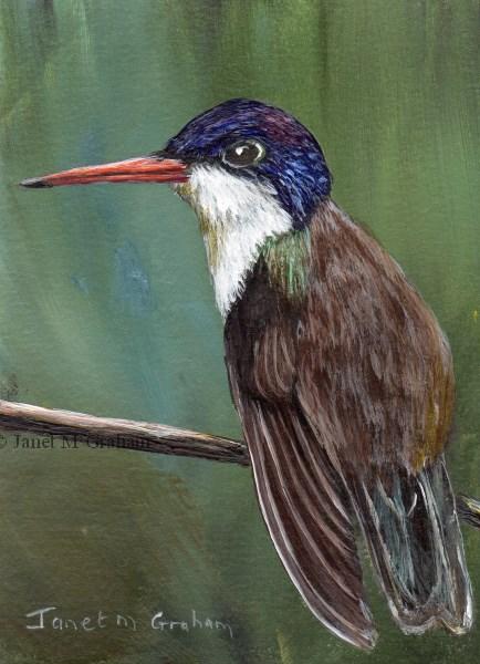 """Violet Crowned Hummingbird ACEO"" original fine art by Janet Graham"
