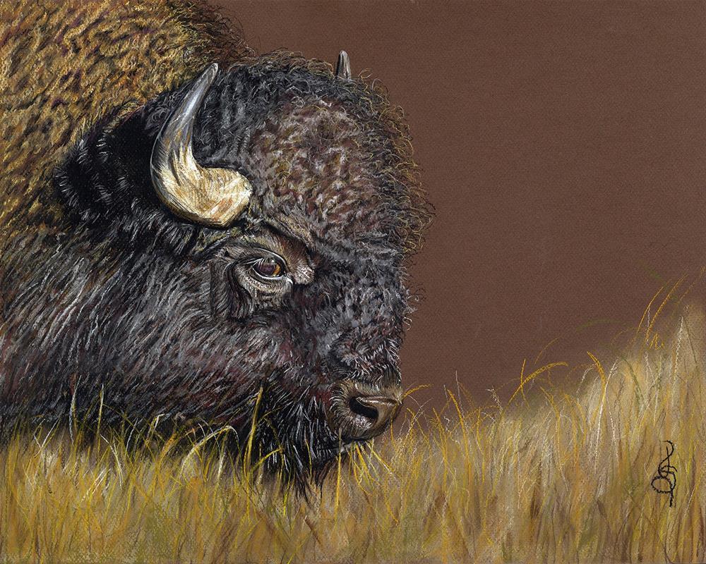 """American Bison"" original fine art by Valorie Sams"