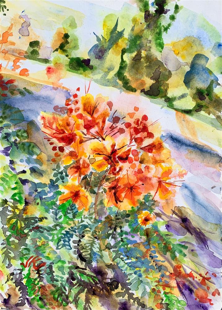 """Caesalpinia pulcherrima - Mexican Bird of Paradise"" original fine art by Jean Krueger"