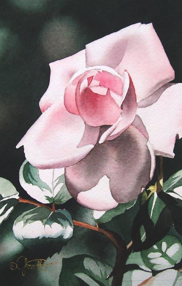 """Blush Pink Rose"" original fine art by Jacqueline Gnott, TWSA, WHS"