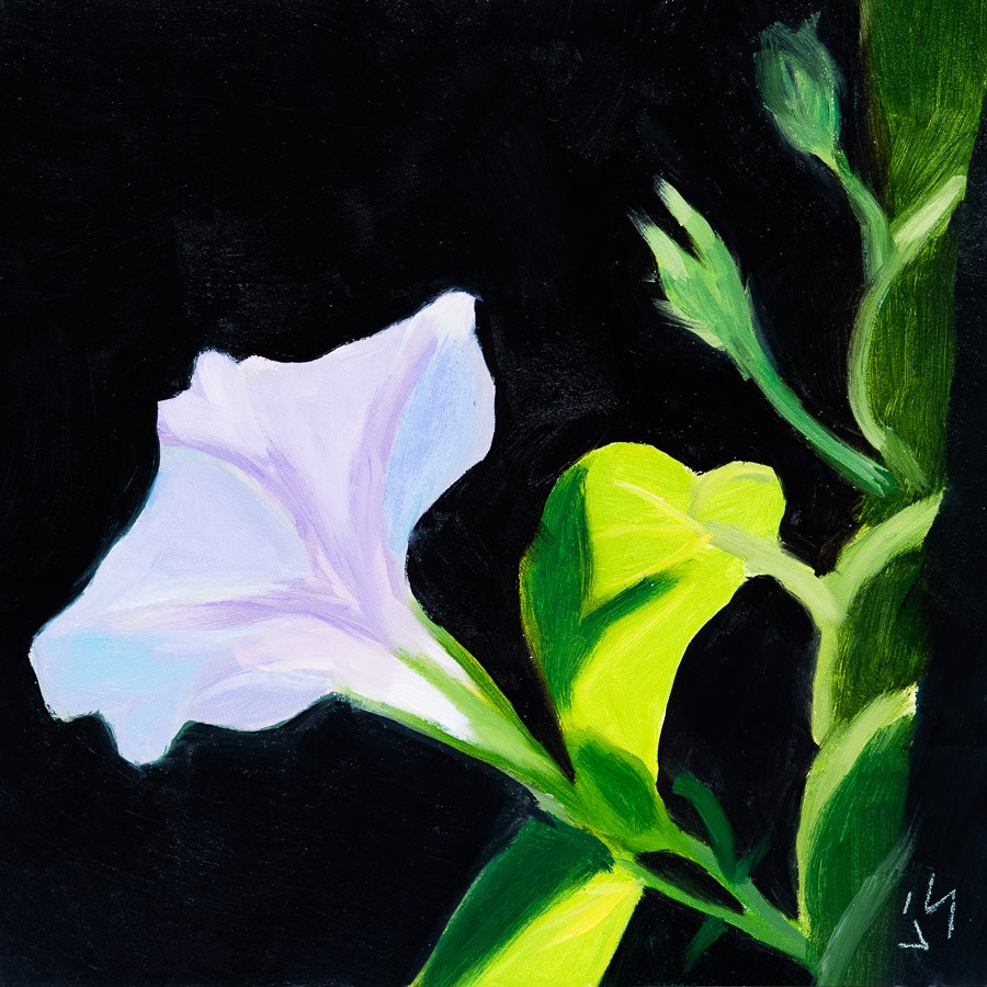 """First Light"" original fine art by Johnna Schelling"