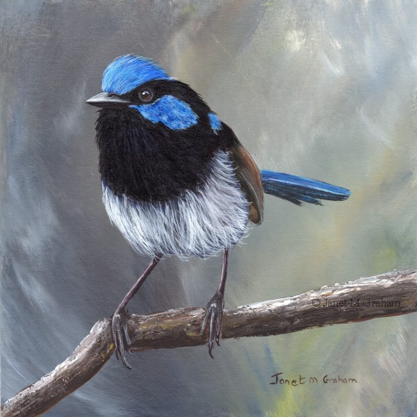 """Superb Fairy Wren No 16"" original fine art by Janet Graham"
