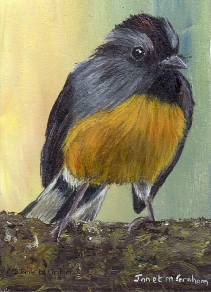 """Slate Throated Redstart ACEO"" original fine art by Janet Graham"