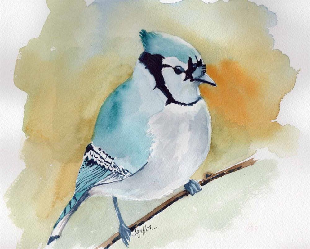 """""""Blue Jay """" original fine art by Bunny Griffeth"""