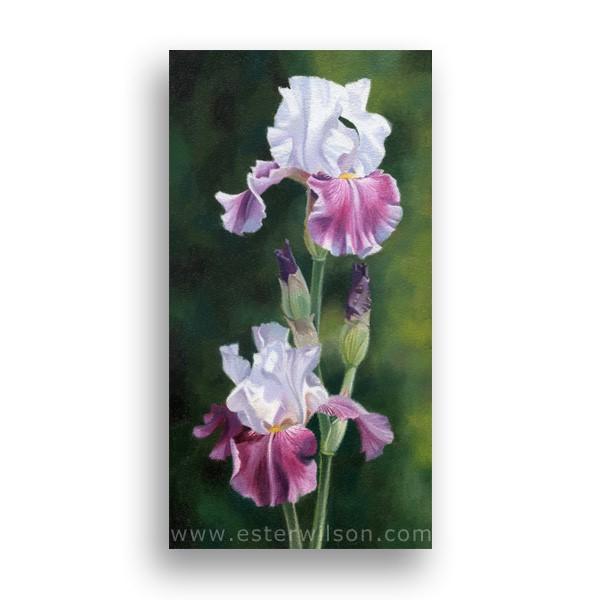"""Double Iris"" original fine art by Ester Wilson"