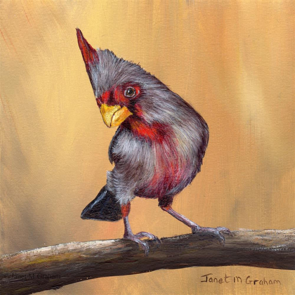 """Pyrrhuloxia"" original fine art by Janet Graham"