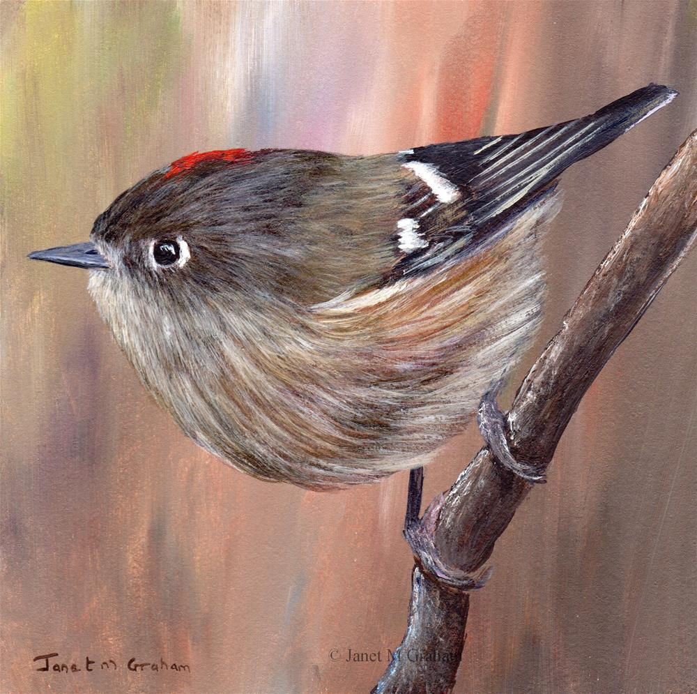 """Ruby Crowned Kinglet No 3"" original fine art by Janet Graham"