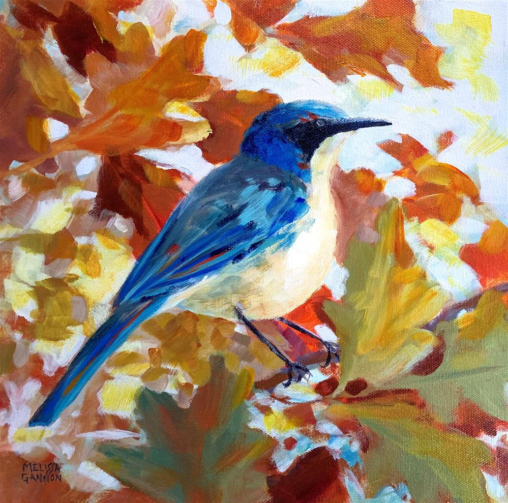 """Steller Jay & Oak Leaves"" original fine art by Melissa Gannon"