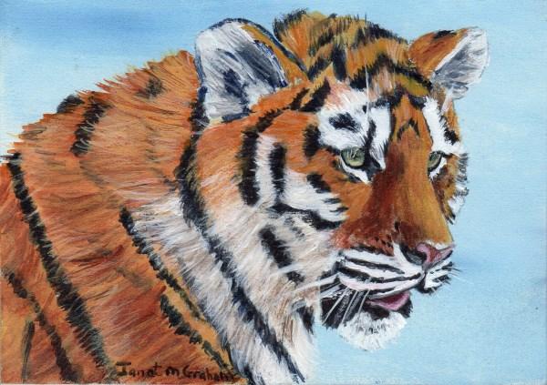 """Tiger Cub ACEO"" original fine art by Janet Graham"
