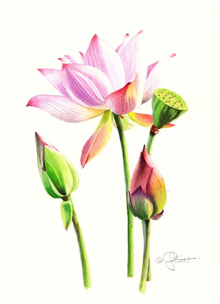 """""""Lotus"""" original fine art by Jacqueline Gnott, TWSA, WHS"""