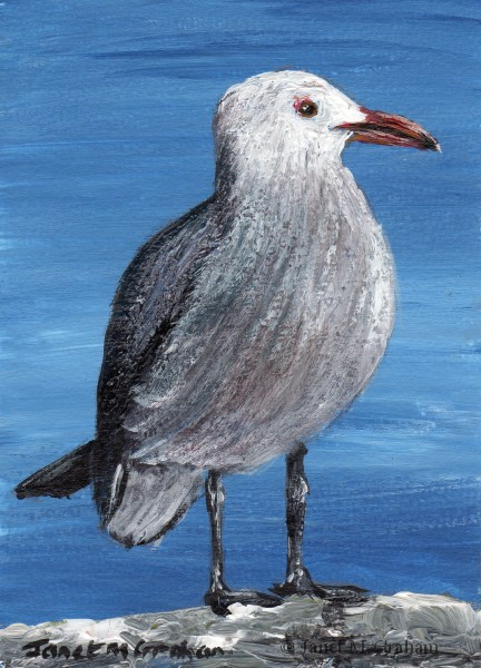"""Heermann's Gull ACEO"" original fine art by Janet Graham"