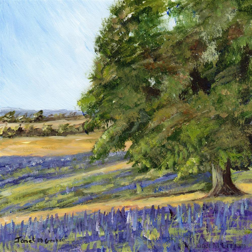"""Lavender Fields"" original fine art by Janet Graham"