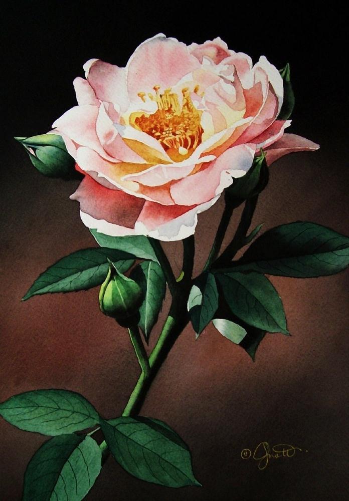"""Evening Rose"" original fine art by Jacqueline Gnott, TWSA, WHS"