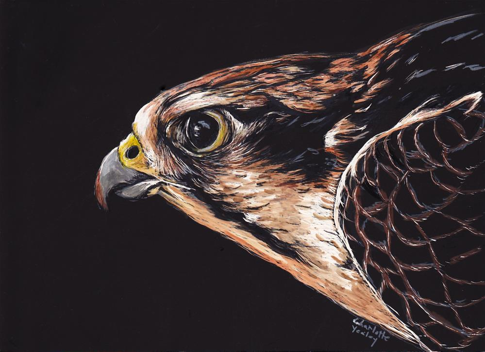 """""""Red Tail Hawk Profile"""" original fine art by Charlotte Yealey"""