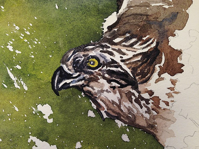 """""""O is for Osprey"""" original fine art by Andy Sewell"""