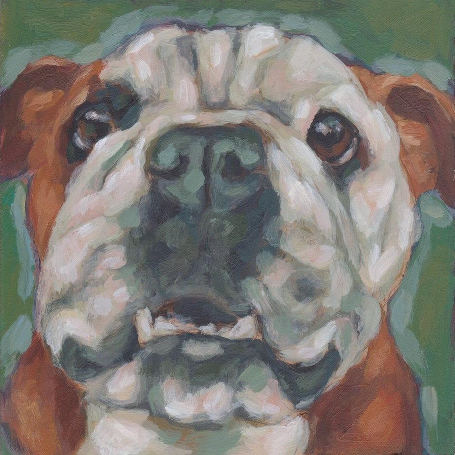 """English Bulldog"" original fine art by Kathy Hiserman"