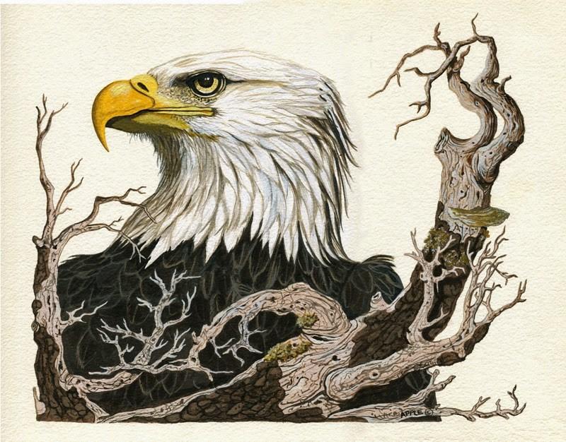 """Eagle - realistic animal bird art illustration"" original fine art by Linda Apple"