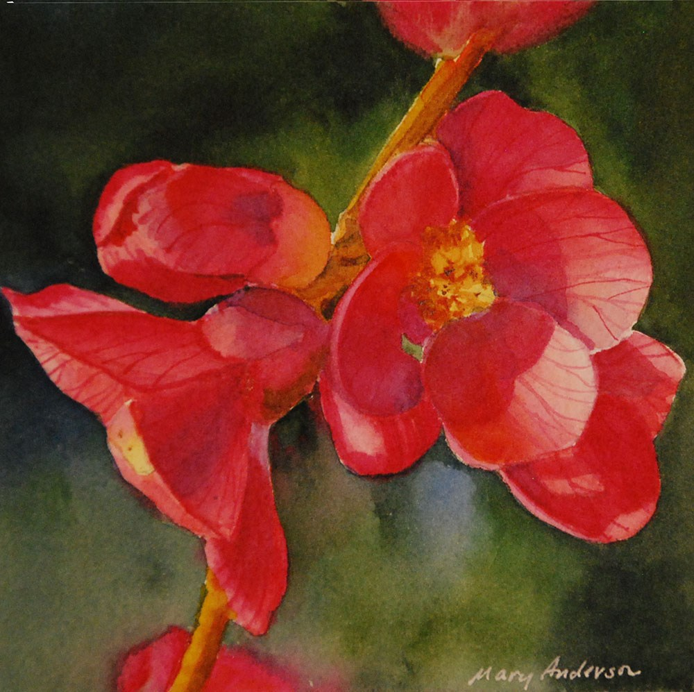 """""""Quince"""" original fine art by Mary Anderson"""