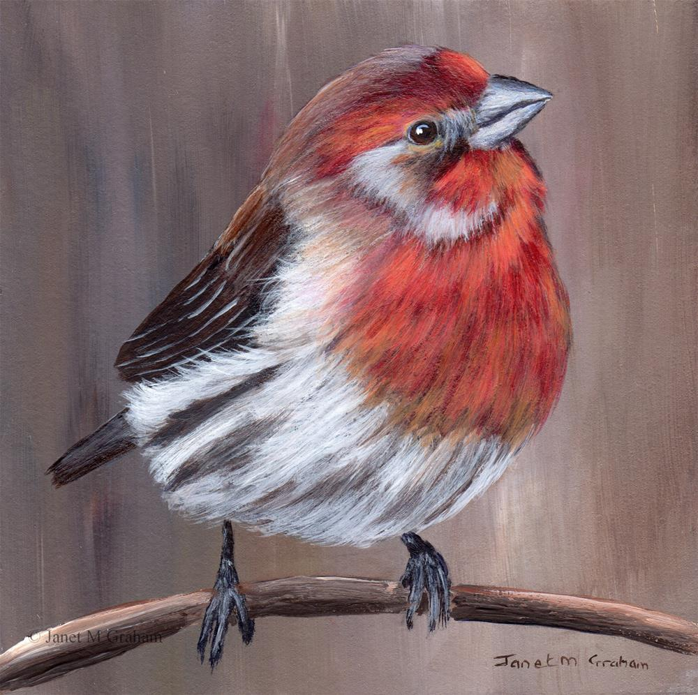 """House Finch"" original fine art by Janet Graham"