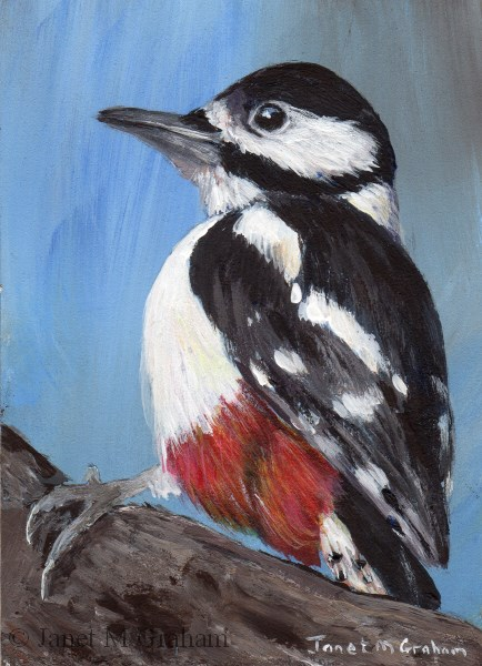 """""""Great Spotted Woodpecker ACEO"""" original fine art by Janet Graham"""