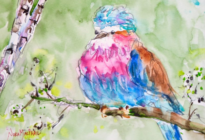 """lilac breasted roller bird"" original fine art by Nora MacPhail"
