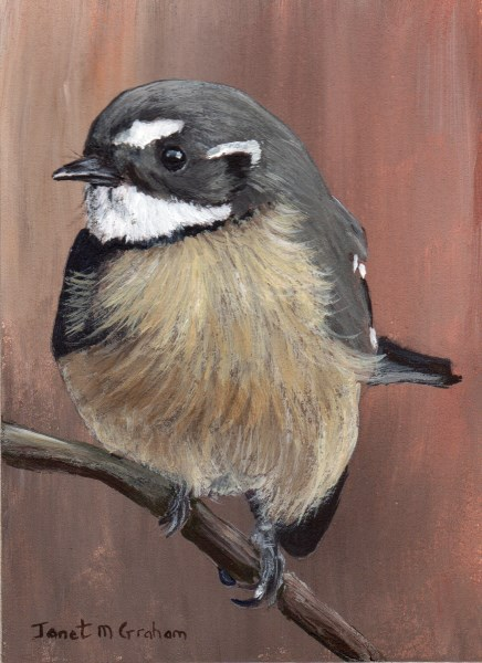 """Grey Fantail ACEO"" original fine art by Janet Graham"