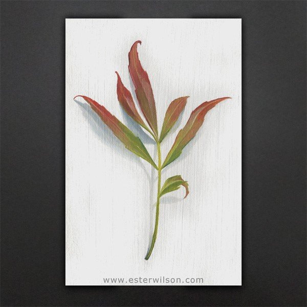 """Chinese Fire Plant"" original fine art by Ester Wilson"