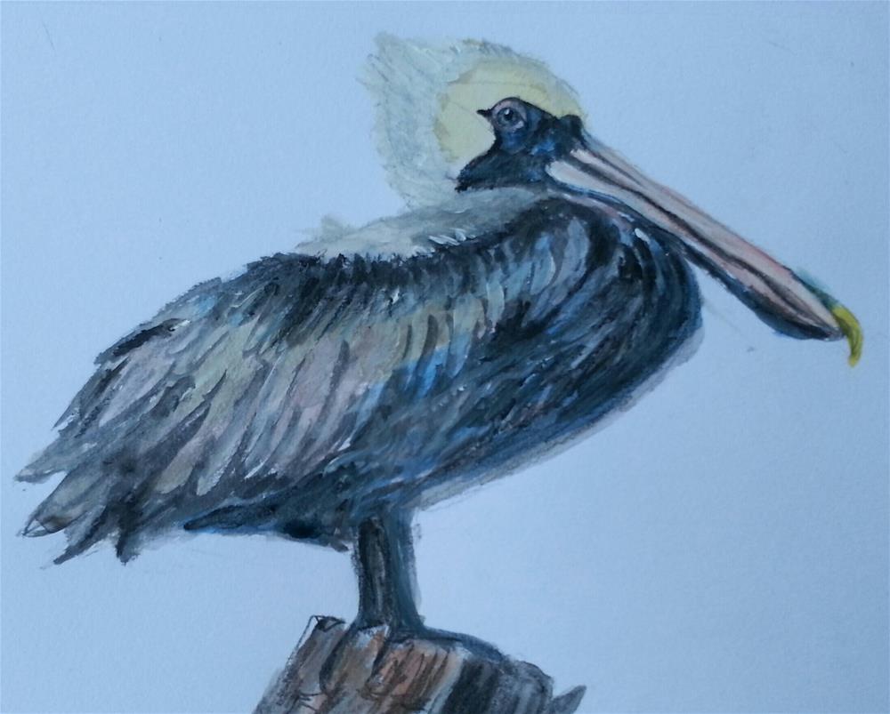"""""""Perky Pelican"""" original fine art by Phyllisha Hamrick"""