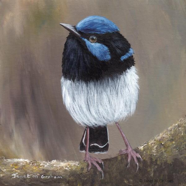 """Superb Fairy Wren No 21"" original fine art by Janet Graham"