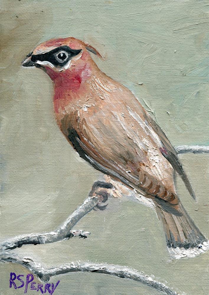 """Cedar Waxwing "" original fine art by R. S. Perry"