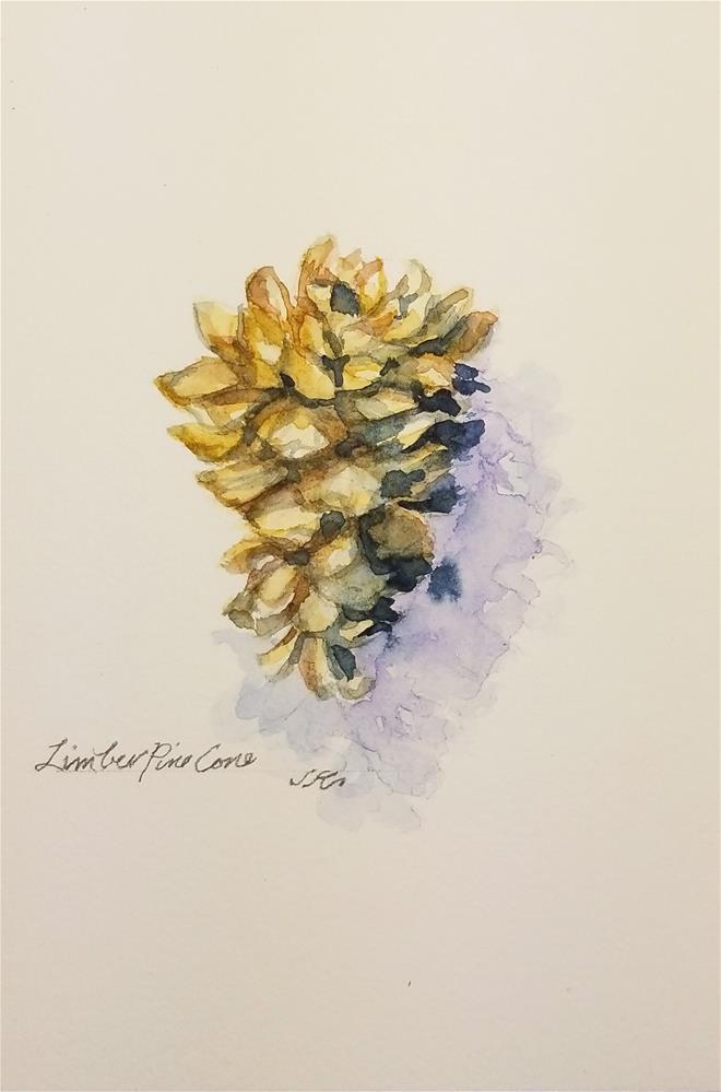 """Limber Pine Cone"" original fine art by Jean Krueger"