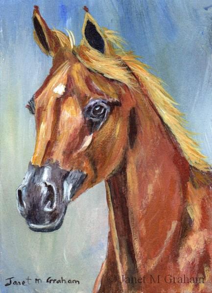 """Arabian Horse ACEO"" original fine art by Janet Graham"