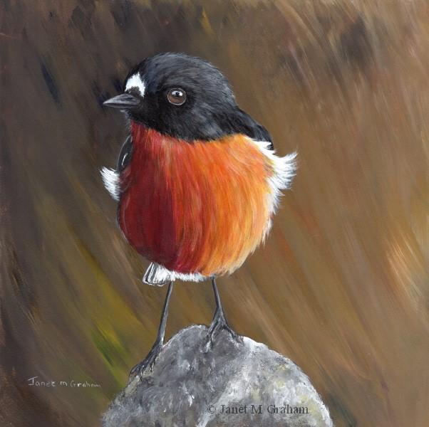 """Flame Robin No 5"" original fine art by Janet Graham"