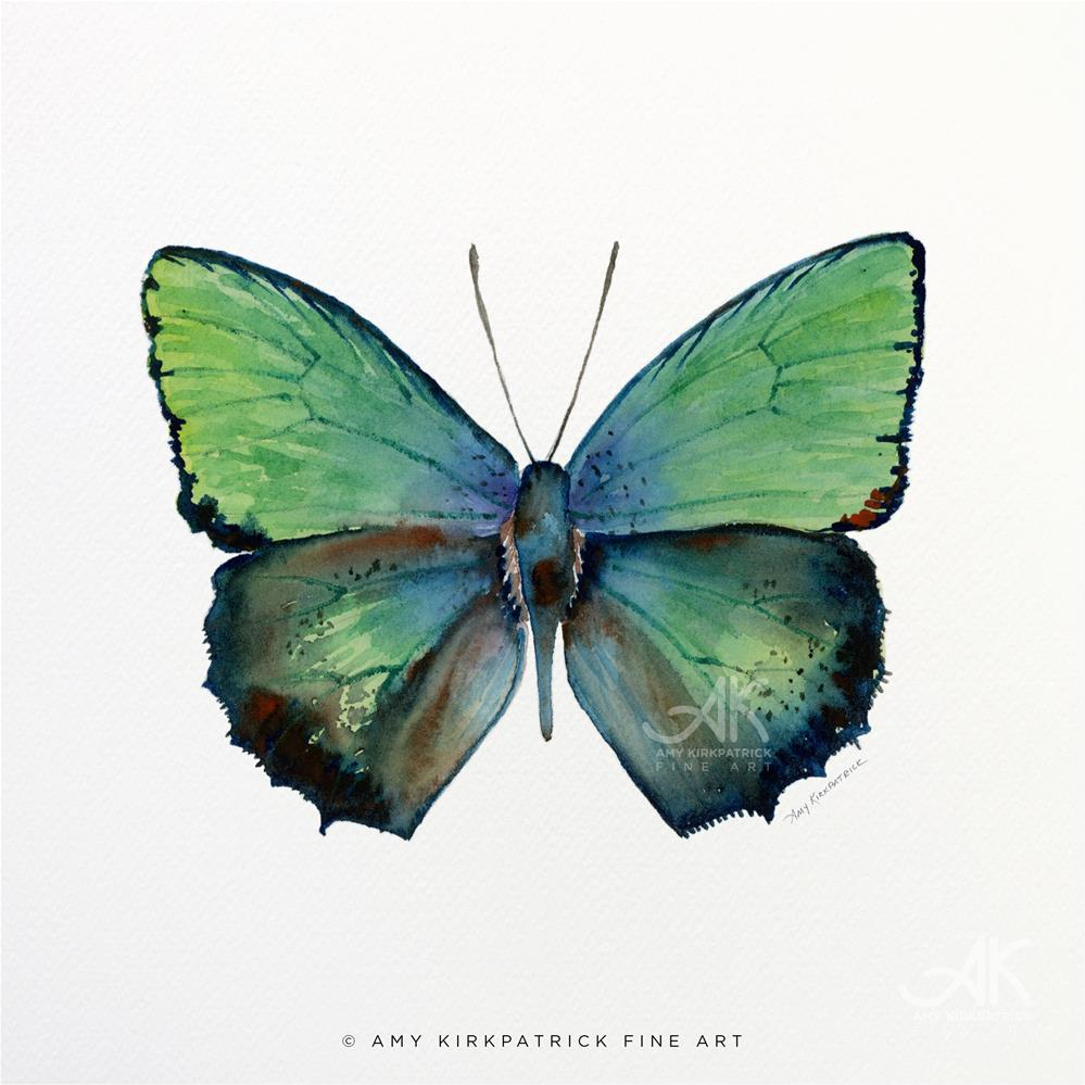 """""""#52 Arhopala Aurea Butterfly #0362"""" original fine art by Amy Kirkpatrick"""