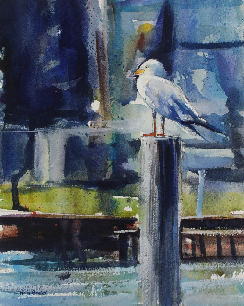 """Seagull"" original fine art by Chris Breier"