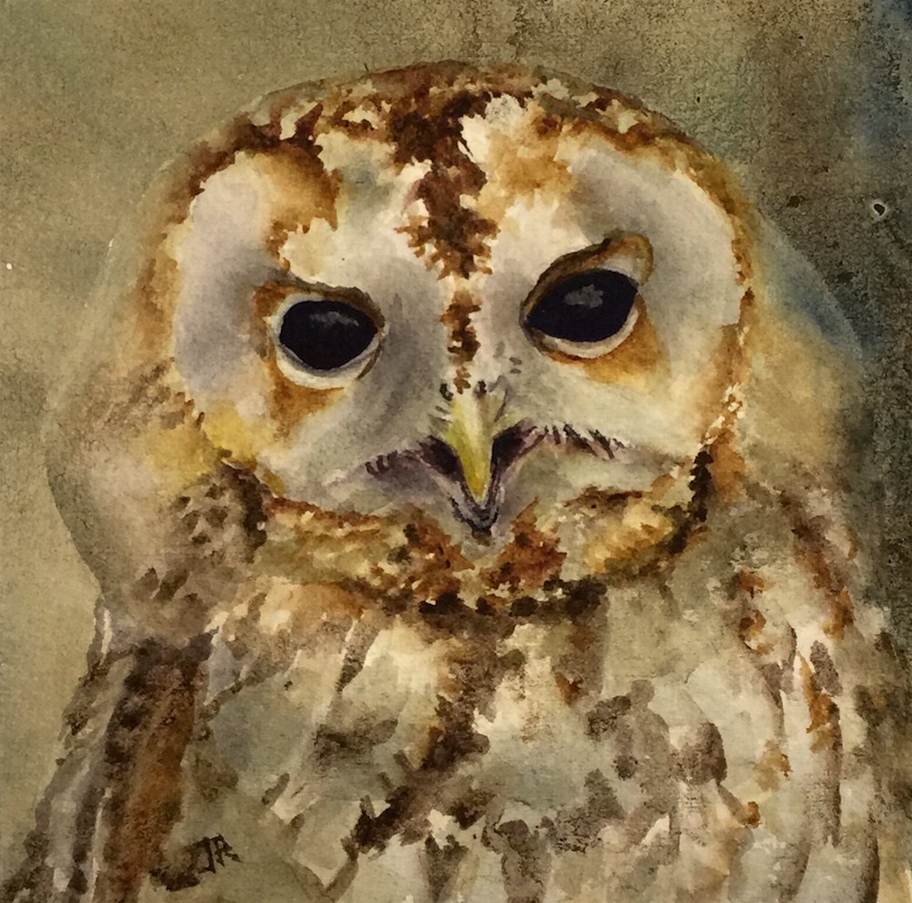 """Young Barred Owl"" original fine art by June Rollins"