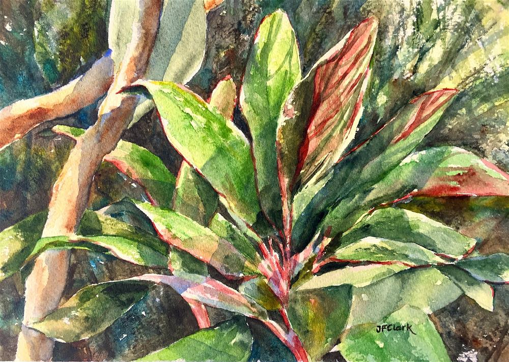 """Canna Lily, study"" original fine art by Judith Freeman Clark"