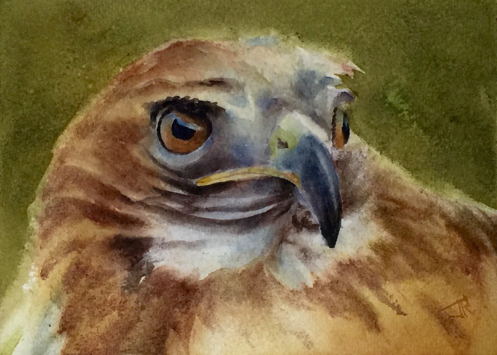 """Red-tailed Hawk"" original fine art by June Rollins"
