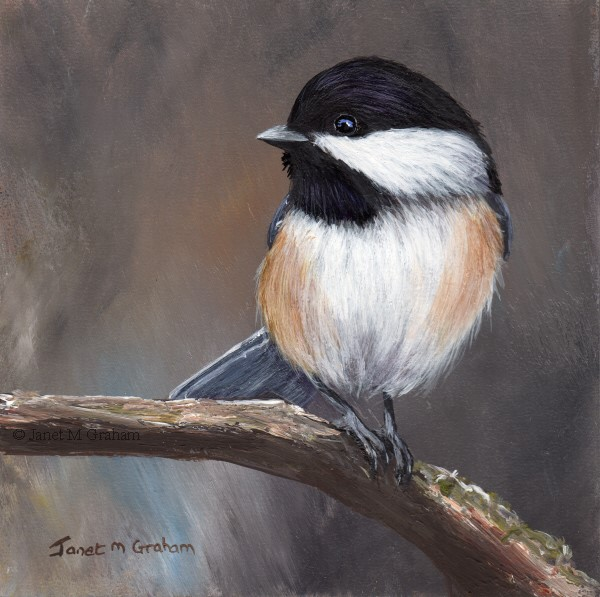 """Black Capped Chickadee No 9"" original fine art by Janet Graham"
