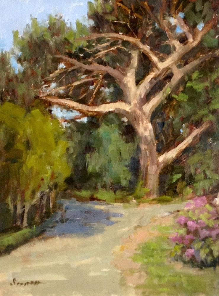 """Ancient Stone Pine"" original fine art by Barbie Smith"