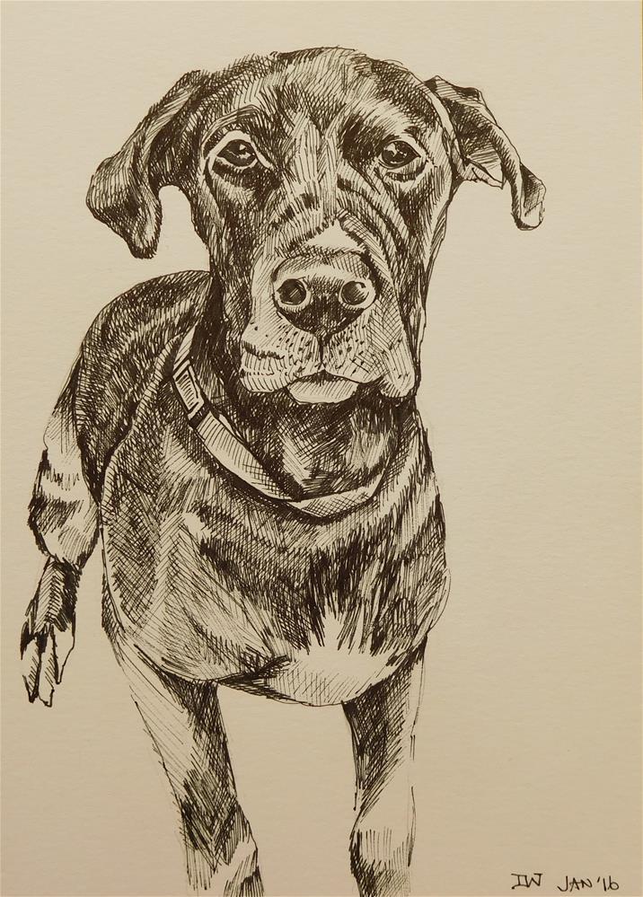 """Dog Sketch 7"" original fine art by Daryl West"