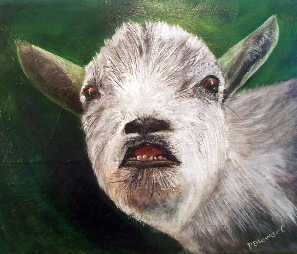 """Pygmy Goat, Smiling, 16 x 20 Acrylic on canvas"" original fine art by Penny Lee StewArt"