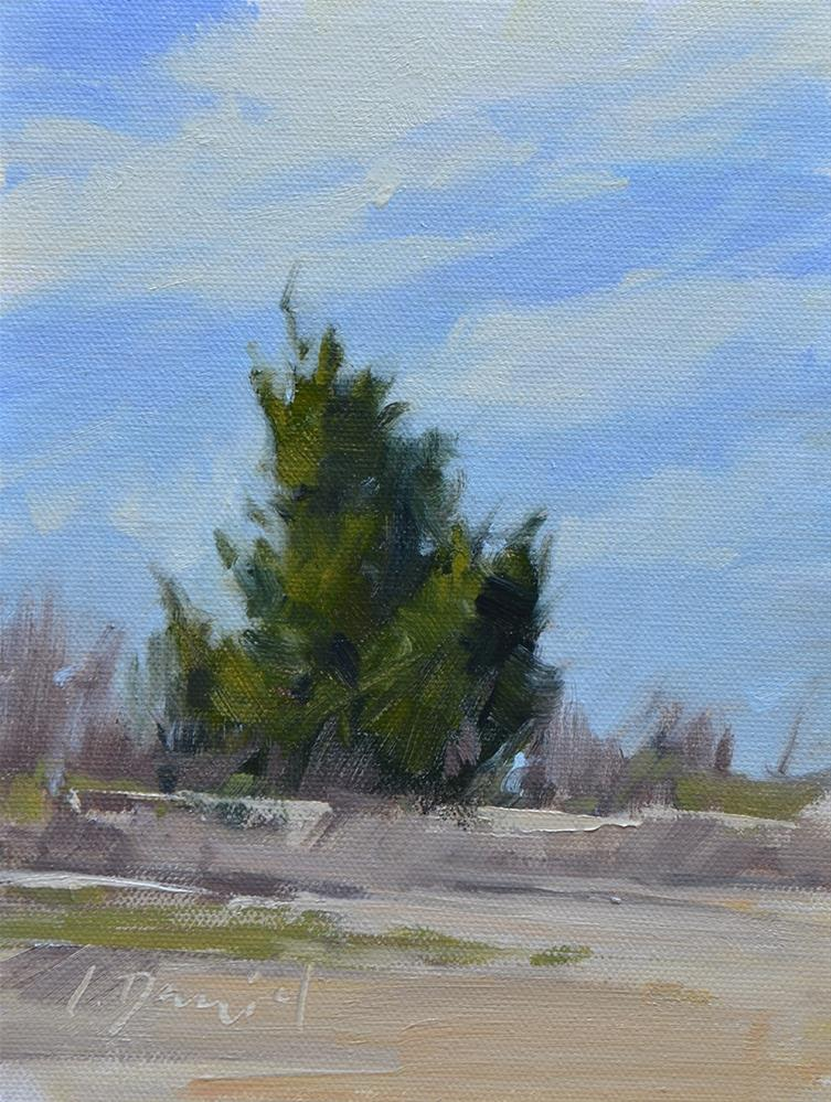 """Crooked Little Tree - repeat post with active link for purchasing"" original fine art by Laurel Daniel"