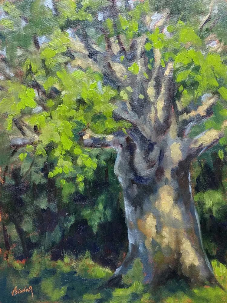 """Babler's Mighty Oak-en plein air"" original fine art by Veronica Brown"